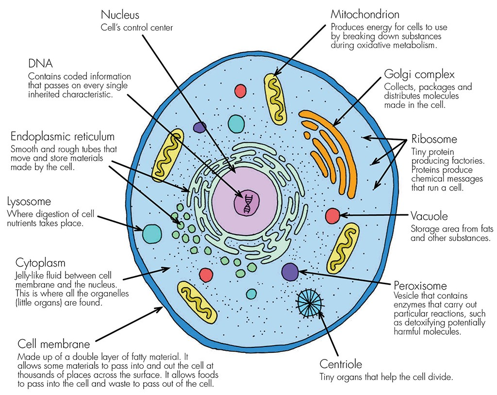Evolution Intelligent Design Lifes History