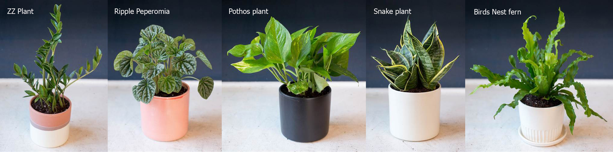 How To Take Care Indoor Plants My Web Value