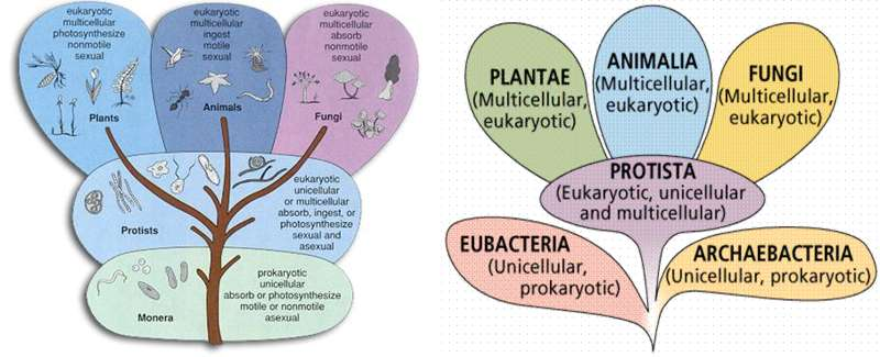 archaebacteria resemble eukaryotes eubacteria biology essay Classification of domains and phyla - hierarchical classification of prokaryotes  bacteria (or eubacteria) and archaea (or archaeobacteria),.