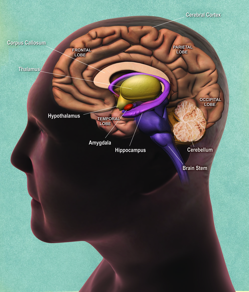 In depressed people, the medial prefrontal cortex exerts greater manipulate over other parts of the thoughts
