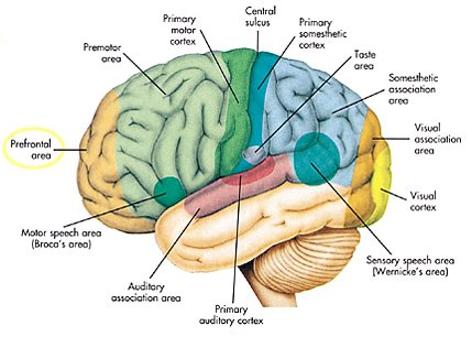 Brain Areas Map