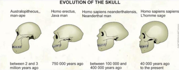 evolution intelligent design lifes history, Human Body