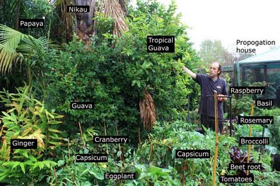 Permaculture Forest Garden Natural Ecosystems that are Edible