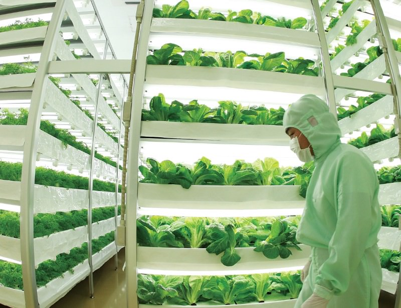 Vertical Farming Indoor Agriculture