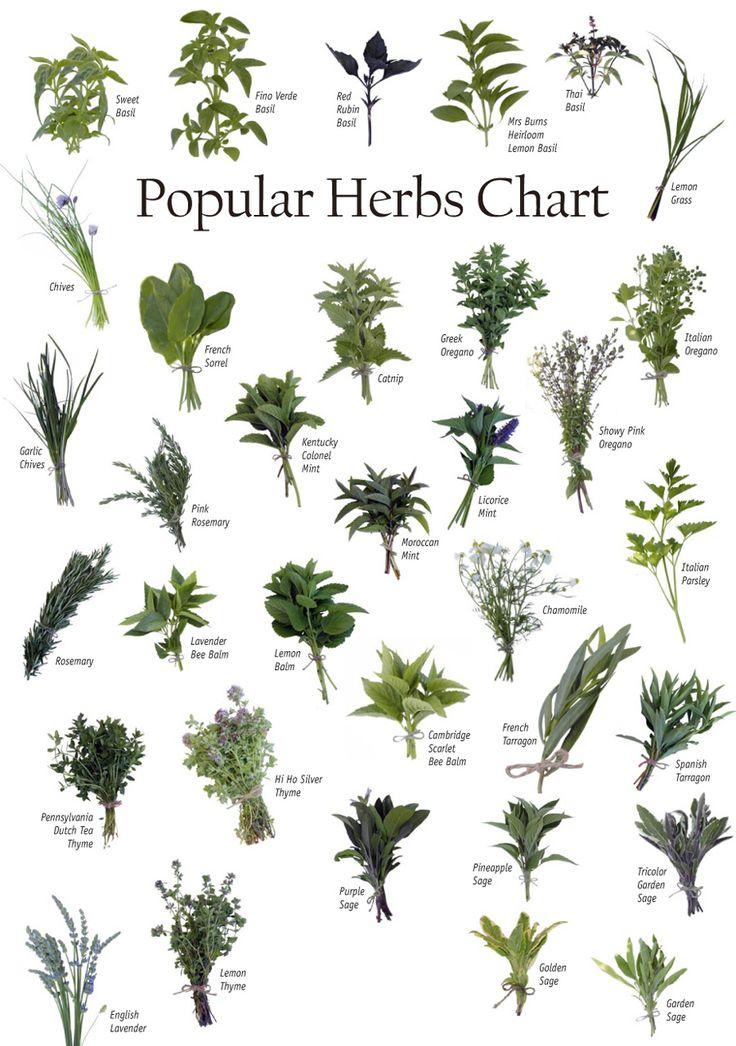Vegetables Fruits Seeds