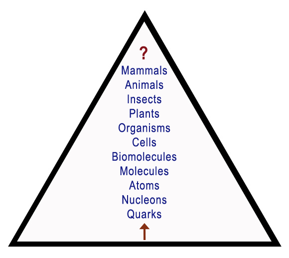 Pyramid of Complexity Triangle